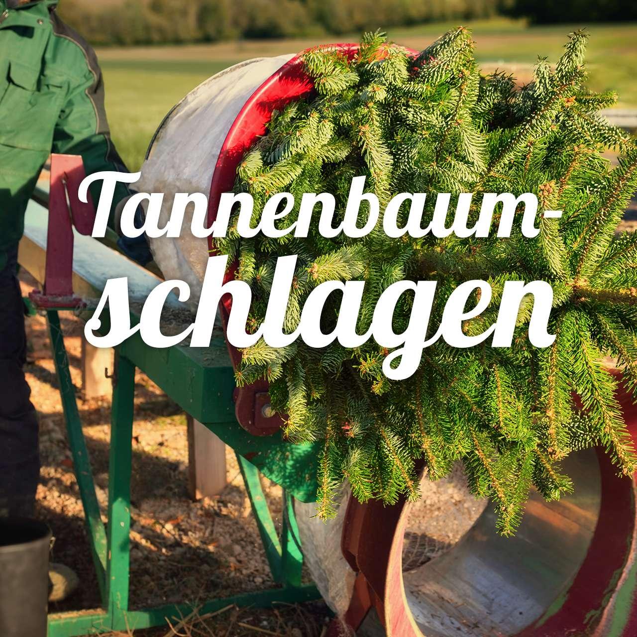 Tannenbaum Netzgerät.Aktives Tannenbaumschlagen Bundesweit Feiern Weihnachtsplaner